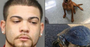 Se entrega hombre buscado por abandonar perro hambriento y dejar congelar una tortuga