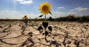 "Expertos advierten ""punto de no retorno"" en 2020 para frenar cambio climático"