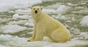 """Estado de emergencia en unas islas de Rusia por una """"invasión"""" de osos polares"""
