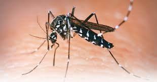 El dengue amenaza en convertirse en epidemia