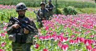 Por qué Estados Unidos perdió la guerra contra el opio en Afganistán tras gastar US$1.500 millones